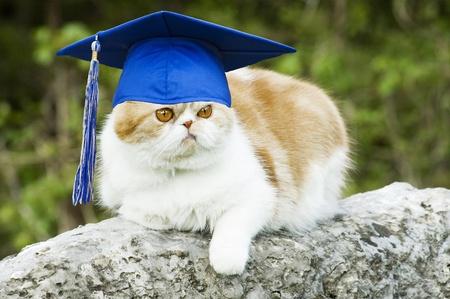 Cat posing on rock with graduation hat with tassel, funny  copy space Reklamní fotografie