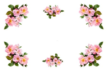 A pink rose border on a white background with center copy space 版權商用圖片
