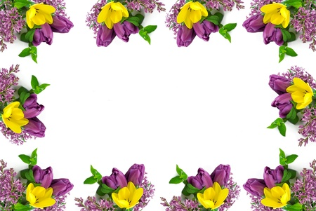 A beautiful yellow and purple tulip spring border, with white copy space in the center, horizontal photo