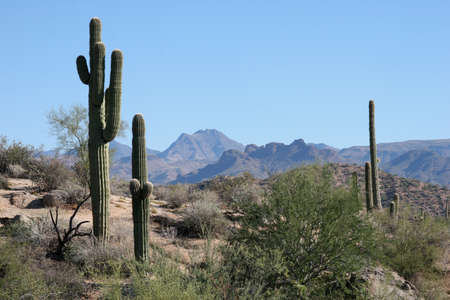 saguaro: Saguaro and Mountains, Cave Creek Arizona Stock Photo