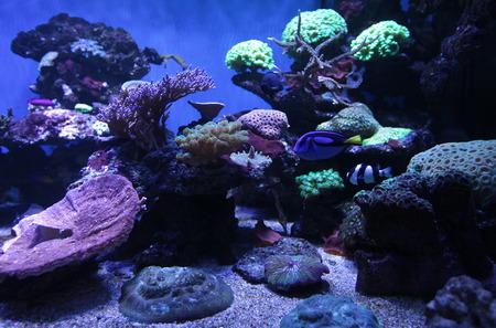 live coral: aquarium
