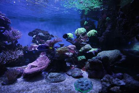 reefscape: aquarium