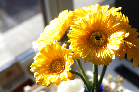 Close up of yellow gerberas in small  blue vase