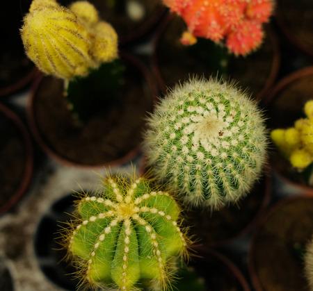 Various types of green cactus  pots in the shop Banco de Imagens