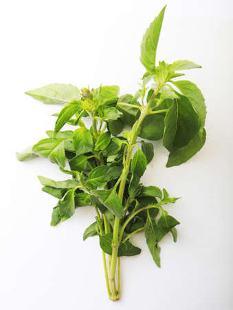 Fresh mint bunch on white background. Top view. Close-up. Stockfoto