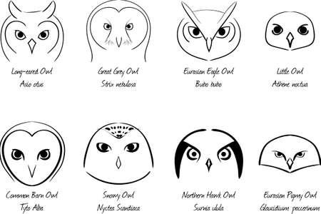 Set of owls Stock Illustratie