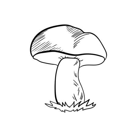 food poison: Hand drawn mushroom on the white background. Vector illustration Illustration