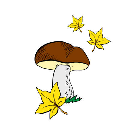 food poison: Hand drawn mushroom and leaves on the white background. Vector illustration Illustration