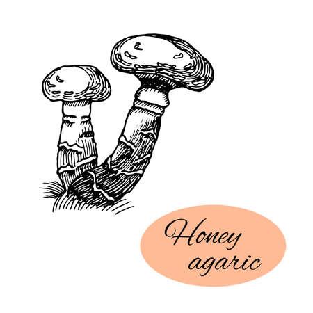 Sketch of honey agaric. Black hand drawn mushrooms on white background. Vector illustration