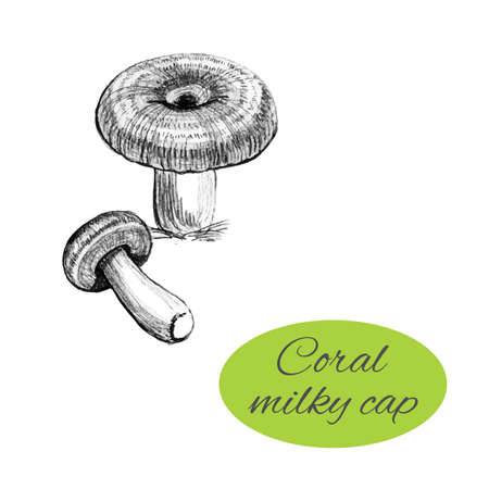 Coral milky cap drawing vector illustration. 向量圖像