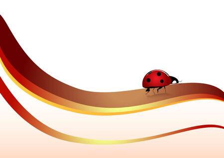 ladyfly: ladybug Illustration