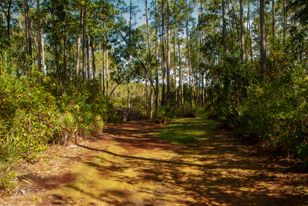 Secluded Trail Walk Фото со стока