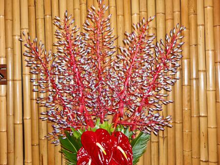 Laceleaf flowers Hawaii flamingo flower