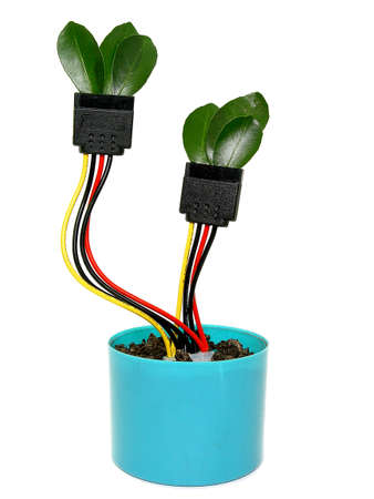 sata: growing sata power cable in the flower pot