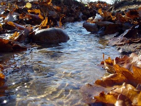 streamlet: autumn transparent spring streamlet with oak leaves