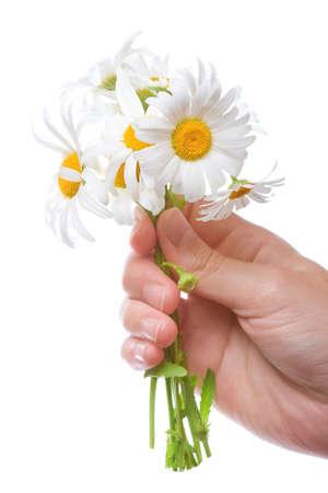 daisy stem: bouquet of daisies in women hand, white background