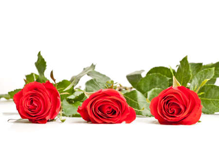 three laying roses with white background and copy space photo