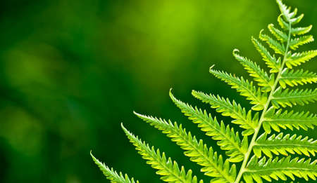 fern: green fern branch, copy space for the text
