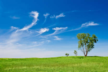 lanscape: three trees lanscape with blue skies Stock Photo