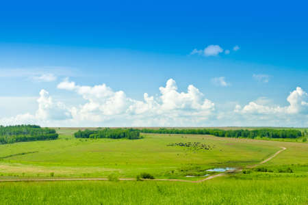 countryside landscape with grazing cows photo