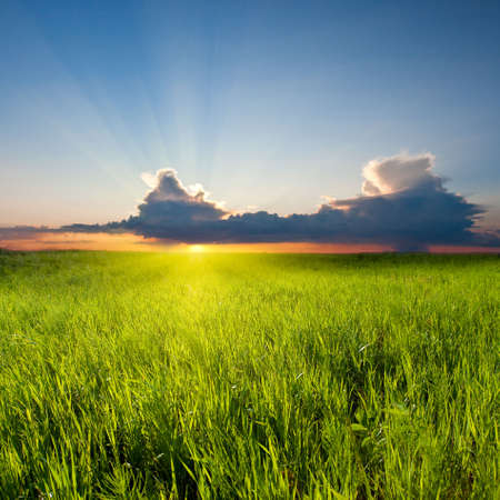 sunset in the green field photo