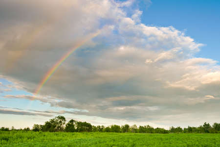 part of rainbow over the green forest photo
