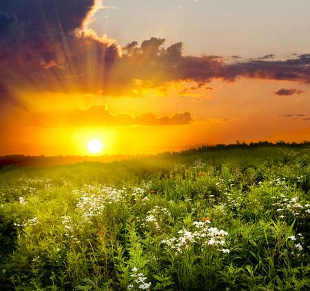 over the hill: puesta de sol sobre la colina con flores blancas