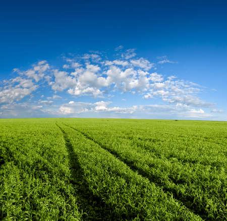 path through the green field Stock Photo - 5188661