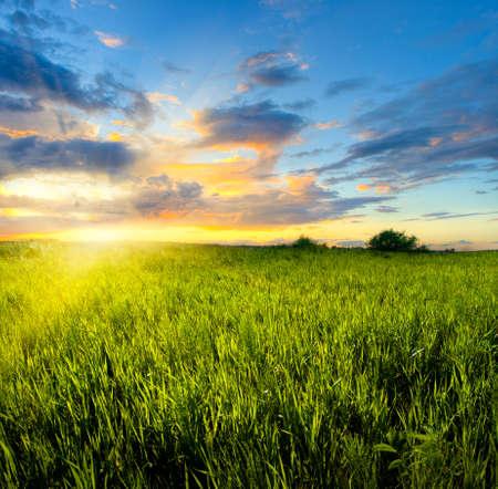 colores de la puesta de sol en el campo verde Foto de archivo - 5188664