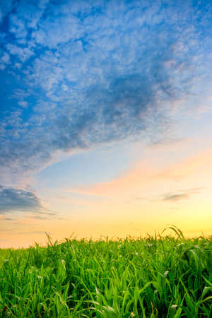 beautiful sunset over green grass Stock Photo - 5270815