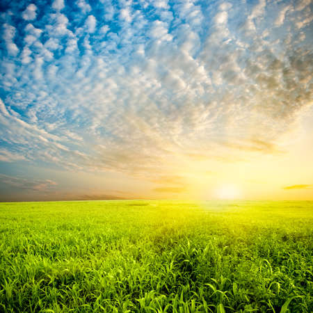 beautiful sunset over the green field photo
