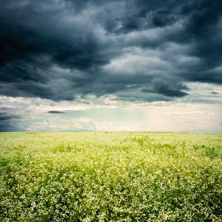 bad weather above the white flowers field Stock Photo - 5284829