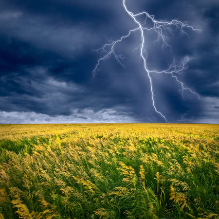 lightning flashes above the filed Stock Photo - 5284898