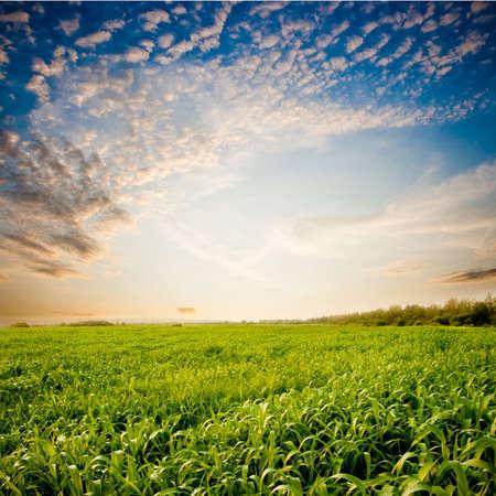 beautiful sunset skies above the green field photo