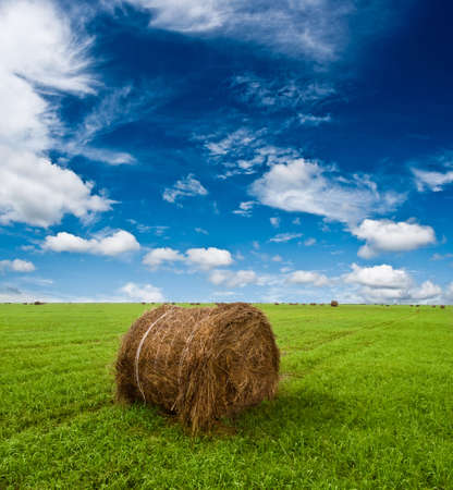 hay roll on green grass under blue skies with clouds Stock Photo - 5524691