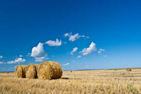 hay rolls on the field under blue skies Stock Photo - 5524713