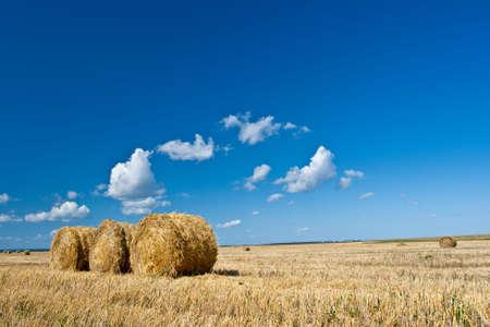 hay rolls on the field under blue skies photo