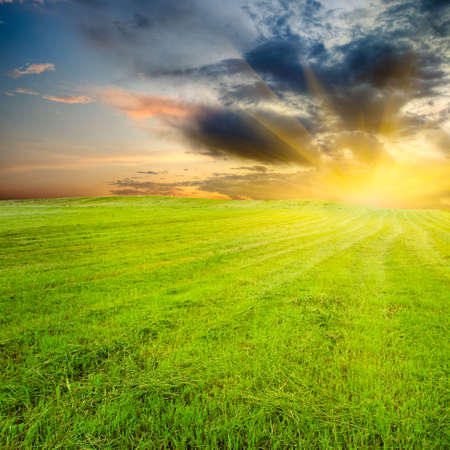 yellow sunset in the green field Stock Photo - 5589669