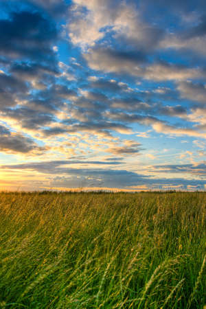 beautiful skies above the  green field Stock Photo - 5777664