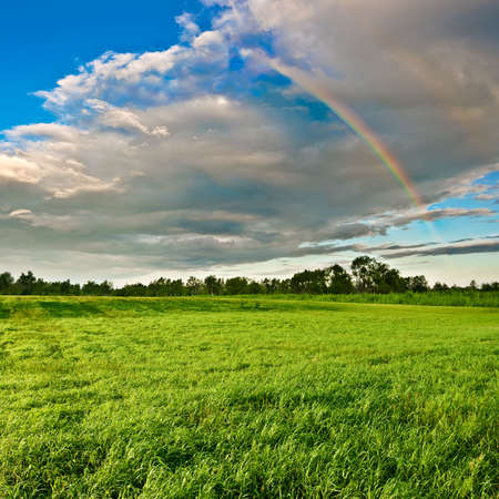 beautiful rainbow above the forest photo