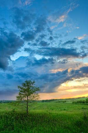 beautiful sunset above the tree photo