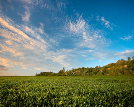 field under the hill on sunset in blue  skies photo