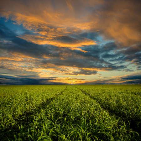 pfad: Weg zum sunset-Trog-Feld