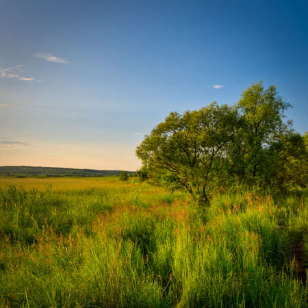 tree in grass under evening skies Stock Photo - 6310934