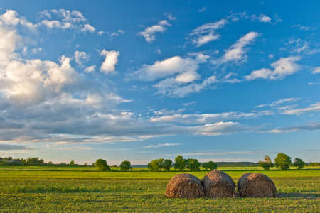 hay stacks on field under beautiful blue skies Stock Photo - 6363944