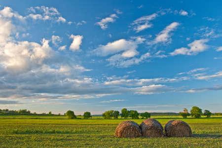 hay stacks on field under beautiful blue skies Stock Photo - 6363944