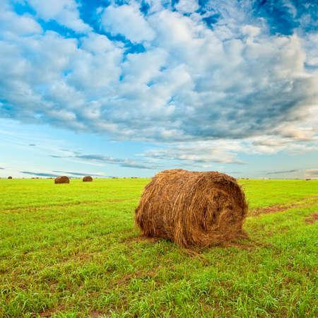 hay roll on field under sunset skies Stock Photo - 6554752