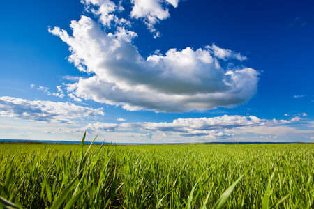 green grass under blue skies with white clouds photo
