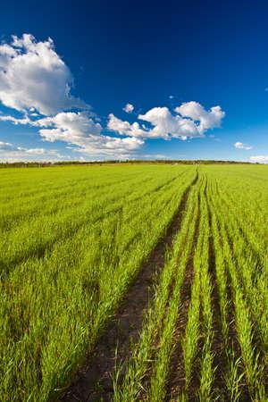 green summer field under blue skies photo