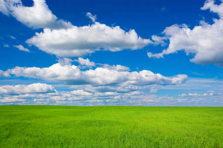 summer landscape green grass blue skies Stock Photo - 7976965